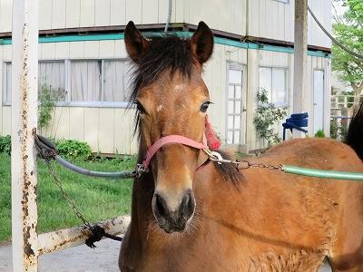 新馬調教 馬が緊張している顔
