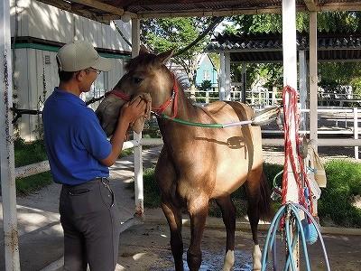 馬の顔の拭き方