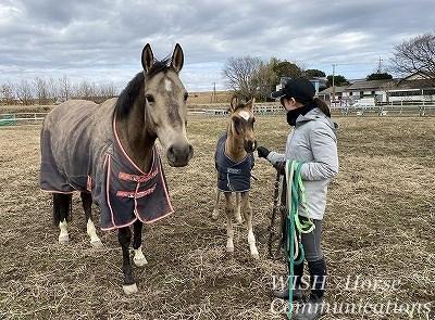 馬と仲良くなれる