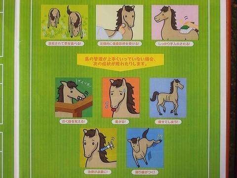 馬のウェルフェア