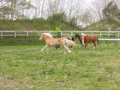 放牧を満喫する馬達