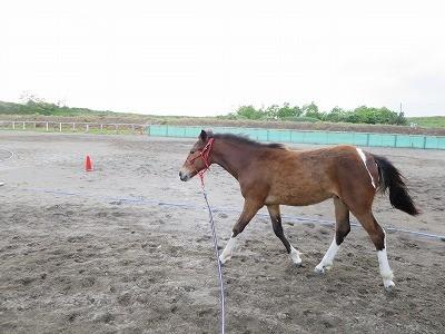 新馬調教 一貫性が大切