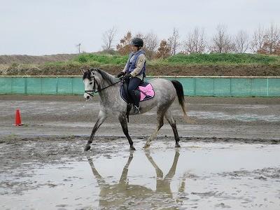 美しい乗馬の姿勢