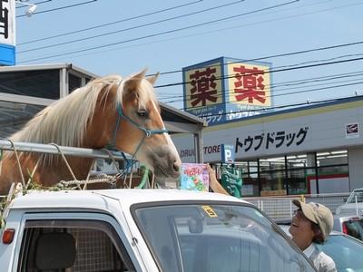 馬とアイス