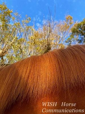綺麗な馬のたてがみ