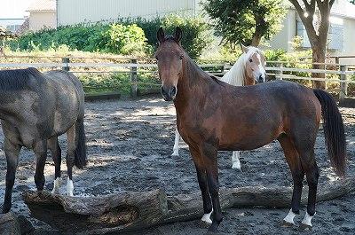 馬と仲良くなりたい