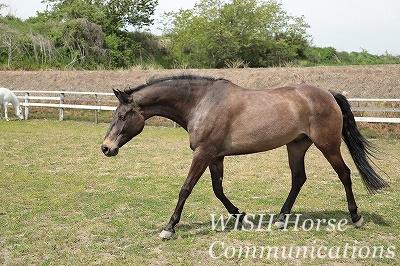馬の美しいアーチ