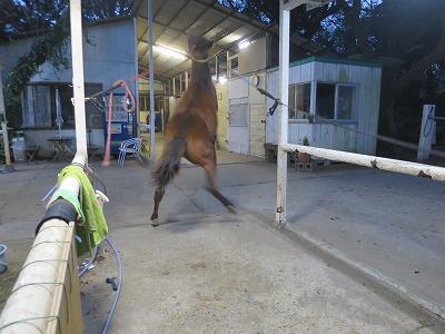 馬を育てよう