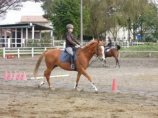 馬と話そう!