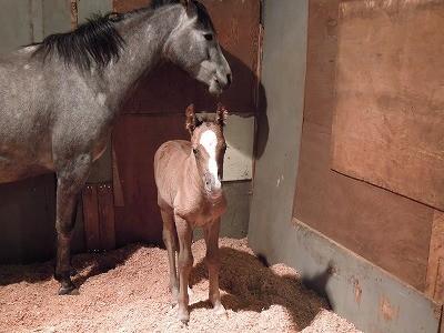 仔馬が生まれました