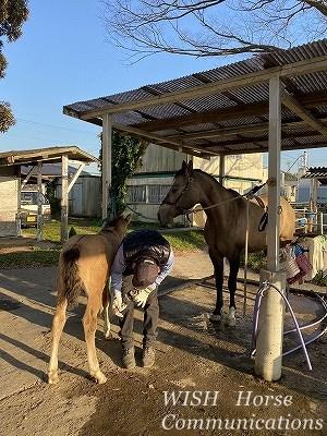 子馬の蹄管理