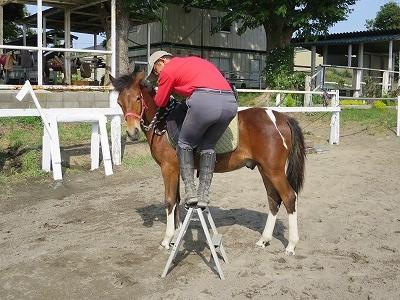 新馬調教 馬にお伺いを立てる