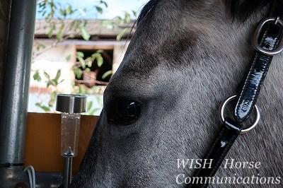 特別に可愛い馬