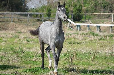 馬の幸せと自分が乗馬することの両立を目指す