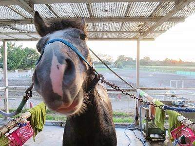 馬の甘えた顔
