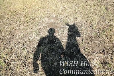 馬と共にある乗馬