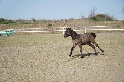 子馬の成長