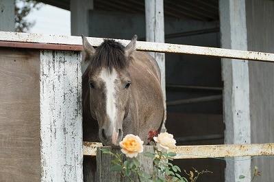 バラと若馬