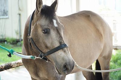 健康に管理され安定している馬