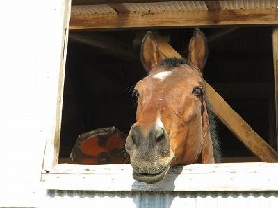 いきいきとした馬の表情