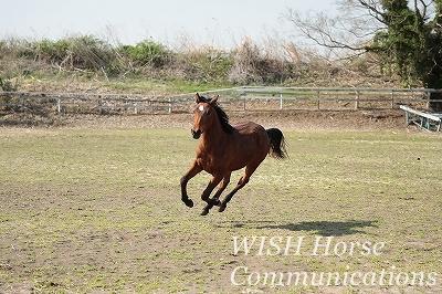 愛しい乗馬