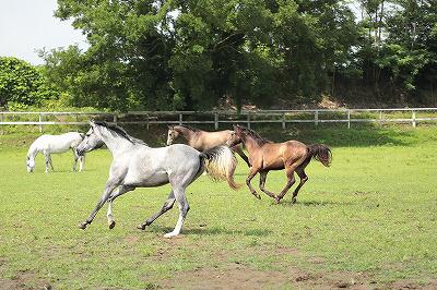 のびのびと走る馬達