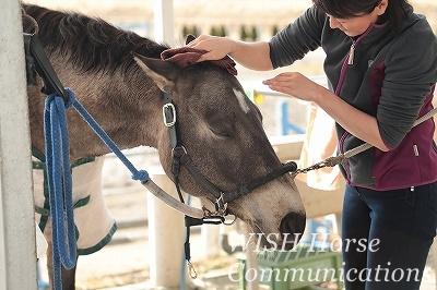 馬と人との絆