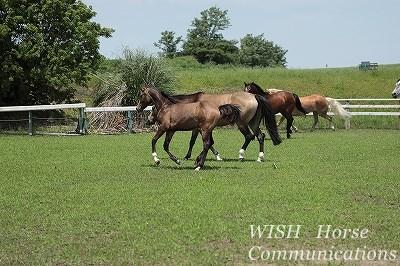 乗馬の新馬調教