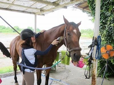 馬との上手なコミュニケーション