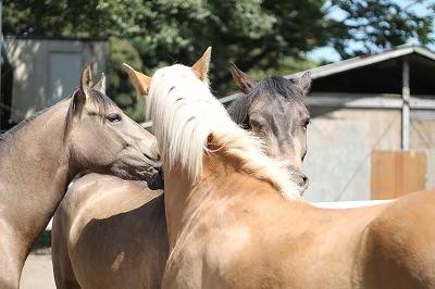 優しい馬たちの風景