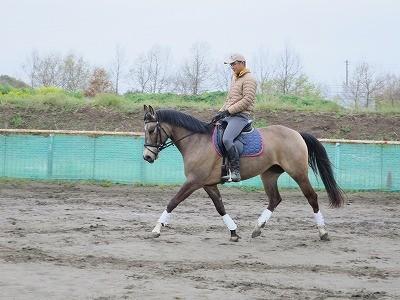 馬とユニゾン