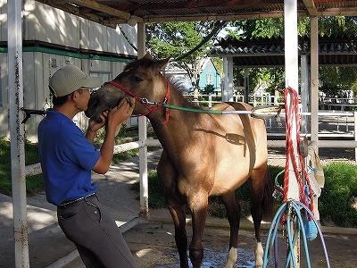 馬にキスされた(笑)