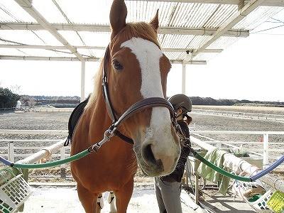 冬晴れ!馬も元気
