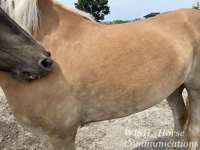 馬の栄養斑点