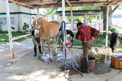 馬の服も洗濯日和