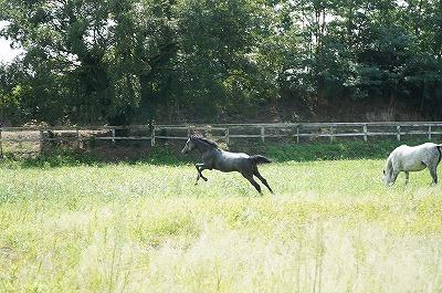 その人がどんないいことを言っていても馬を見れば本当のことが分かります