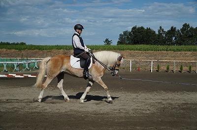 馬と仲良くなるためのテクニック