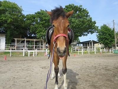 新馬調教 調教は馬と相談しながら