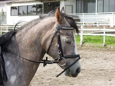馬の気持ちいい時の顔