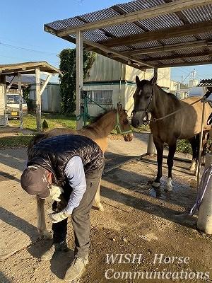 子馬の削蹄