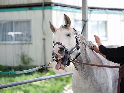 幸せな馬の表情