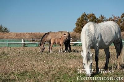 仔馬の冒険