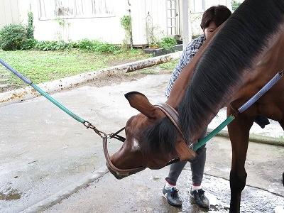 気持ちよがる馬