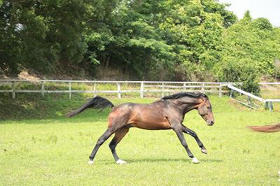 のびのび美しい馬