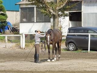 馬、コミュニケーション