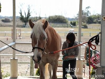 心寄り添う乗馬