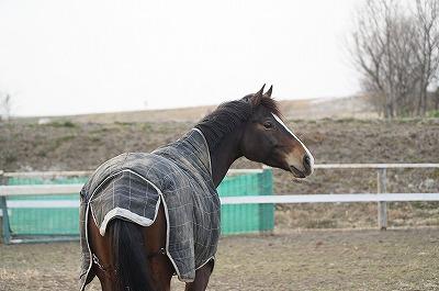 馬とアイコンタクト