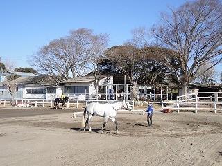 馬へのボイスコマンド