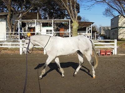 リラックスして受け入れた馬のボディランゲージ