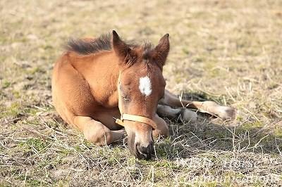 子馬のうたた寝